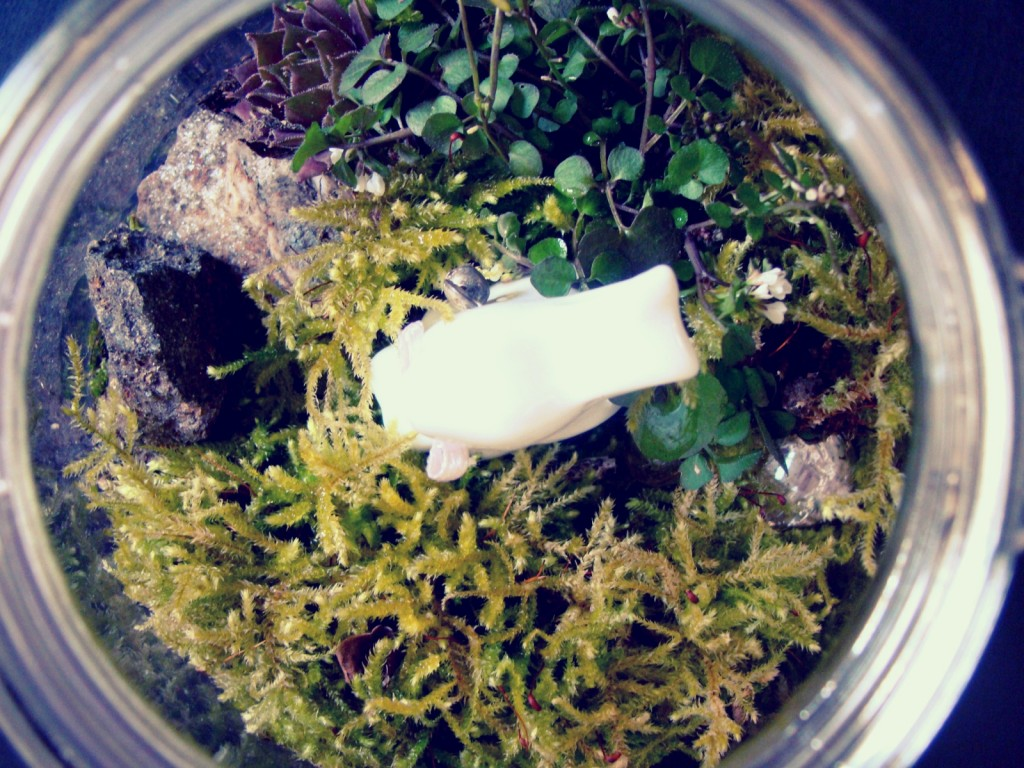 Oster Deko DIY Fairy Garden Pflanzenterrarium