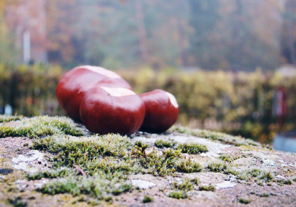Kastanien Herbst Deko
